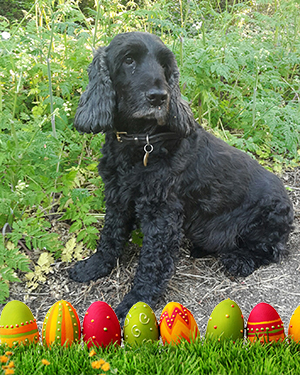 Allison Rodgers Alfie's Easter Thought of the Day